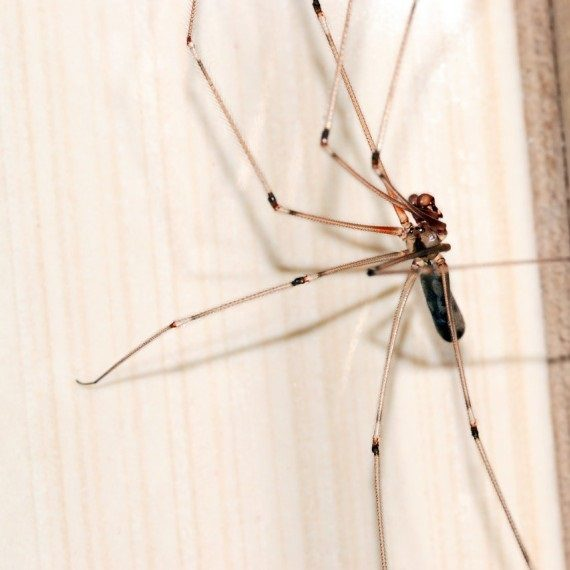 Spiders, Pest Control in East Ham, Beckton, E6. Call Now! 020 8166 9746