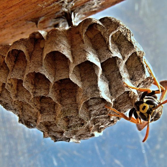 Wasps Nest, Pest Control in East Ham, Beckton, E6. Call Now! 020 8166 9746